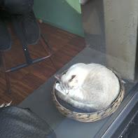 cat cafe7